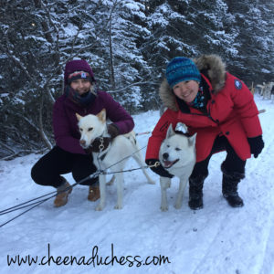 With the Gorgeous Huskies