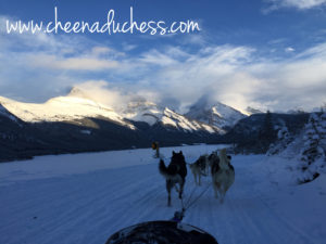 Dog Sled in Action